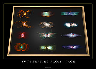 Butterflies from Space